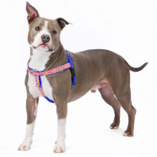 *Stars and Stripes Limited Edition Freedom No-Pull Dog Harness